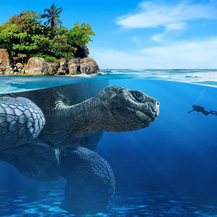 Turtle Island.